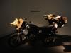 Hilarius Hofstede - Into the Wild / Cherchez la truffe