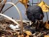 Alette Wwtewaall - Vulica Aves Maniera